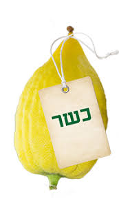 etrog for sale buy kosher lulav esrog etrog set for sukkot delivered to your door