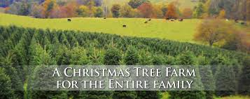 panoramic view christmas tree farm in boone nc the online home