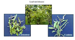 Tropical Plant Diseases - diseases and pests of food plants jhansi