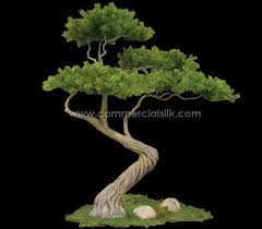 40 best the of bonsai images on bonsai trees