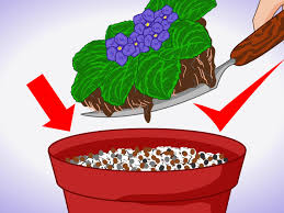 how to grow african violets indoors 9 steps with pictures