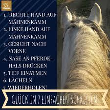 sprüche reiten 29 besten pferde bilder auf pferde zitate pferde