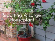 How To Save A Dying Plant Save A Dying Plant Plants Brown And Gardens