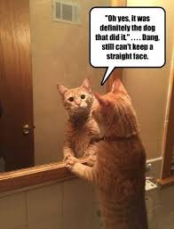 Looking In The Mirror Meme - cat trying to sound convincing i can has cheezburger