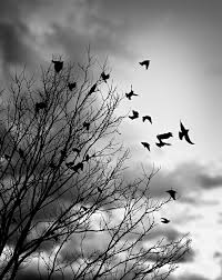 black and white pictures of birds flying impremedia