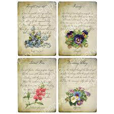 The Language Of Flowers Inkspired Musings October Flower Cosmos Language Of Flowers And