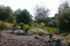 native plants of western australia uc berkeley botanical garden evolution of plants