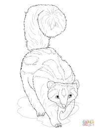 8 images of ferret coloring pages realistic coloring page