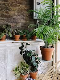 indoor plants that need no light caring for indoor plants in low light conditions architectural digest
