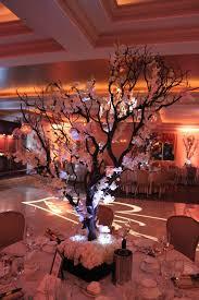 best 25 manzanita tree ideas on pinterest manzanita tree