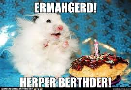 Ermahgerd Animal Memes - ermahgerd birthday meme birthday best of the funny meme
