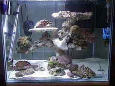Okeanos Aquascaping Pin By Kyle On Salty Reefer Pinterest Aquariums