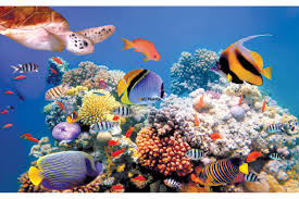 mural sea bottom with fishes and a turtle wallpapers mural sea bottom with fishes and a turtle