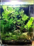 low tech non co2 tanks post your pics page 36
