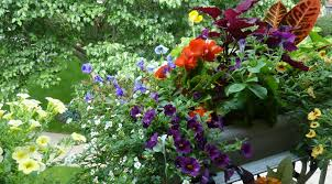 flower gardening for beginners best picture home decorations insight
