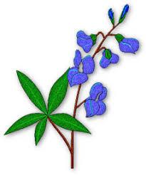 Bluebonnet Flowers - flowers clipart and flower graphics