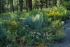 native plants of montana about blackfoot native plants