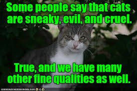 Evil Cat Meme - lolcats evil lol at funny cat memes funny cat pictures with