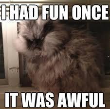 Grumpy Cat Meme I Had Fun Once - i can has cheezburger i had fun once funny animals online