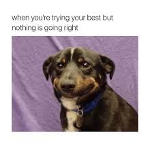 Your The Best Meme - when you re trying your best but nothing is going right best