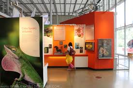 Academy Of Art Interior Design by San Francisco California Academy Of Sciences Part 2 Color And