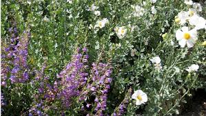 you u0027ll get a jump on spring gardening at this native plants sale