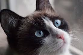 with coma in cats symptoms causes diagnosis treatment