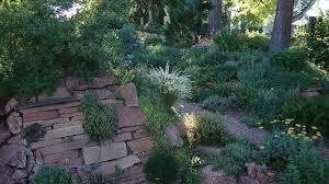 Fern Rock Garden Apartments Grasses And The Rock Garden Forum Topic American Rock