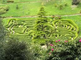 Laurel Topiary - hedge news hedge xpress