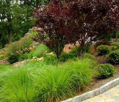discover great ornamental grasses