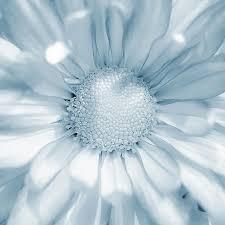powder blue 114 best color me powder blue images on pinterest baby blue