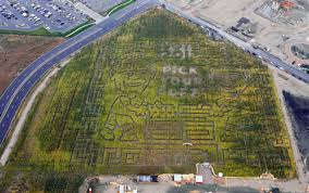 go right or left it s your vote in thanksgiving point corn maze