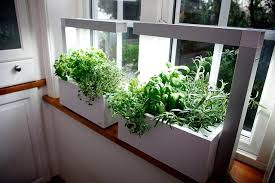 herbs indoors how to grow herbs growing herb tips from guzmansgreenhouse com