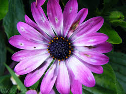 purple flower affordable purple flower for flowers on home design ideas with hd