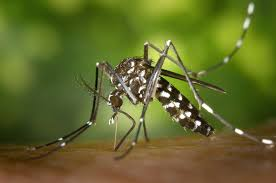 prevent a mosquito infestation in and around backyard pools earthkind