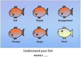 Funny Fish Memes - fish memes funny fish pictures memey com