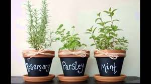 apartment herb garden gardening ideas