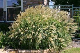 creativity of decorative grasses amazing home decor 2017