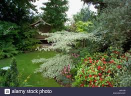 small town garden with structure interesting trees and shrubs