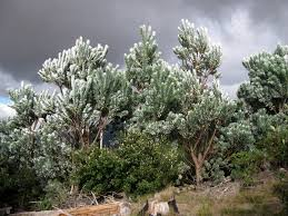 city of and storms in and around cape town silver trees