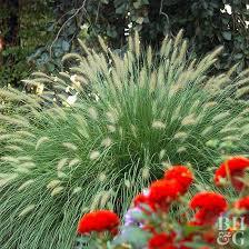 easy ornamental grasses