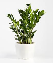 good houseplants for low light 14 hardy houseplants that will survive the winter real simple