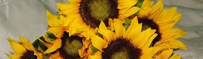 silk sunflowers top tips on buying silk flowers the artificial flowers company