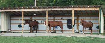 Loafing Shed Plans Horse Shelter by Shelter For Senior Horses Ferrell Hollow Farm