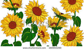 hand drawn sunflowers leaves isolated on stock vector 480993289