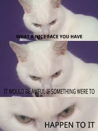 White Cat Meme - my cat luna is evil know your meme