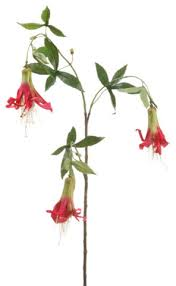 Flowers Direct Silk Plants Direct Honeysuckle Pack Of 6 Traditional