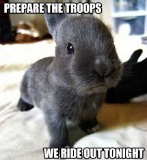 Animal Meme - bunny funny animal prepare the troops we ride out tonight meme picture
