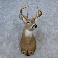 whitetail deer shoulder mount for sale 15584 the taxidermy store