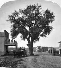 strong roots pueblo s infamous hanging tree lives on